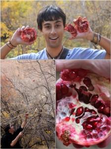 pomegranate-qalat